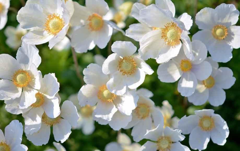 white-flower-plant-flowers-67608